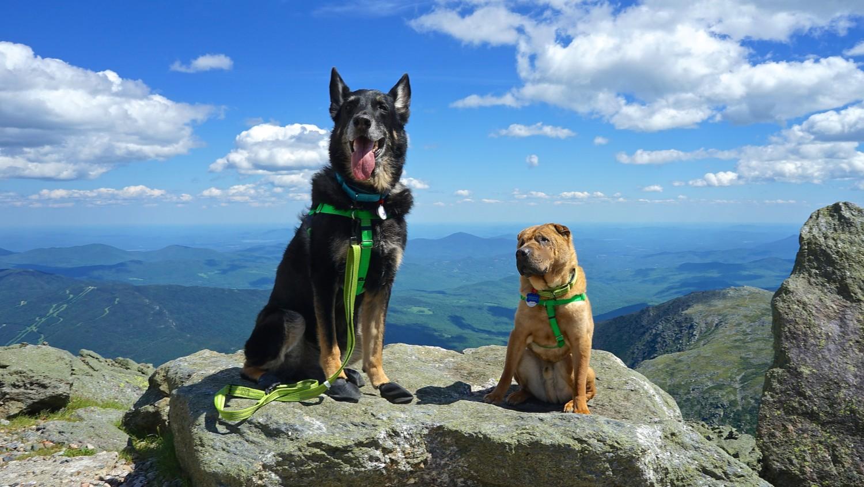 New Hampshire's Top Pet Friendly Attraction: Mount Washington