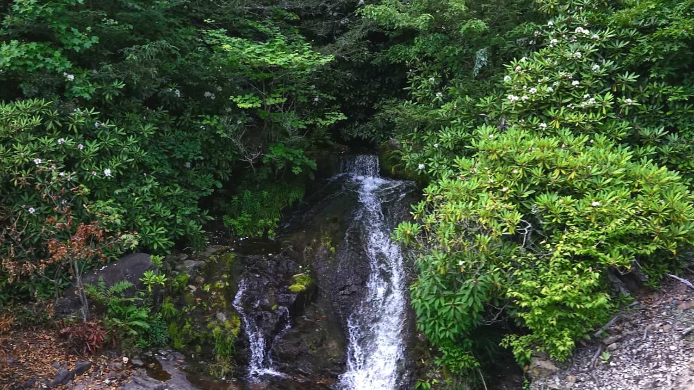Waterfall along the pet friendly Lehigh Gorge Scenic Railway in Jim Thorpe, PA