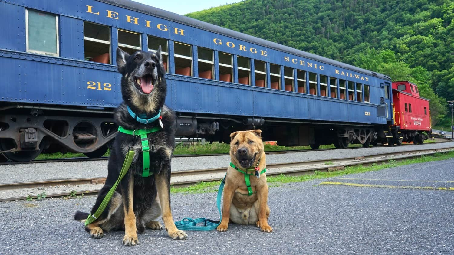Pennsylvania's Top Pet Friendly Attraction: Lehigh Gorge Scenic Railway