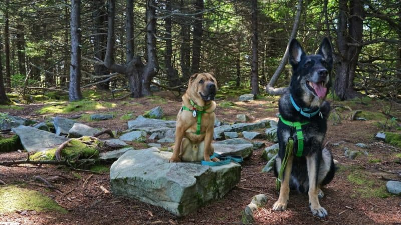 West Virginia's Top Pet Friendly Attraction: The Monongahela National Forest | GoPetFriendly.com