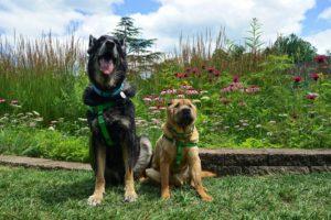 Ohio's Top Pet Friendly Attraction: Holden Arboretum | GoPetFriendly.com