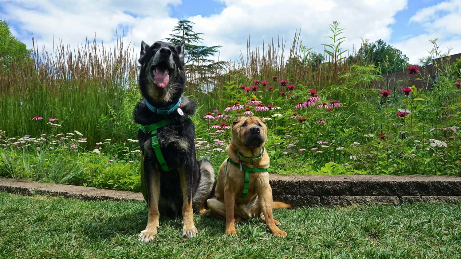 Ohio's Top Pet Friendly Attraction: Holden Arboretum