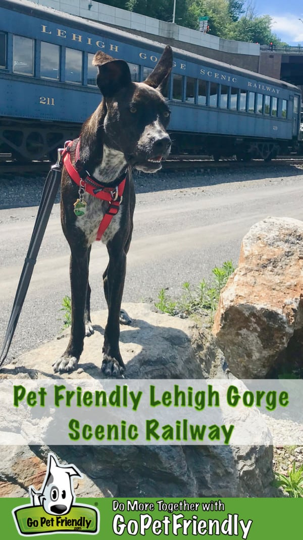 Brindle dog in front of a car from the pet friendly Lehigh Gorge Scenic Railway in Jim Thorpe, PA