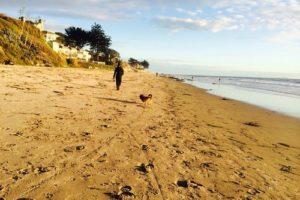 California's Dog Friendly Beaches - From the Redwoods to Santa Barbara   GoPetFriendly.com