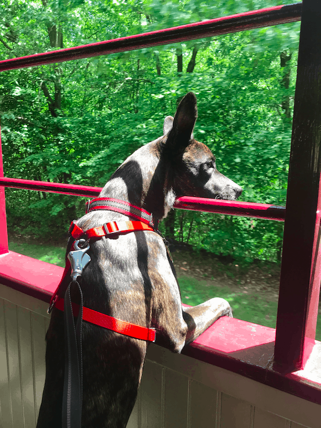 Pet Friendly Lehigh Gorge Scenic Railway in Pennsylvania