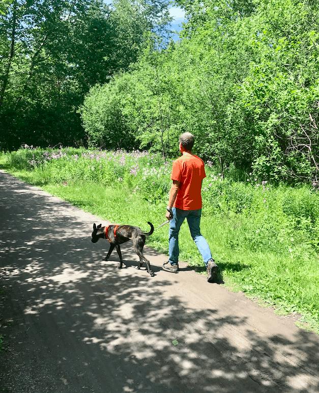 Man walking dog on a pet friendly trail in Jim Thorpe, PA