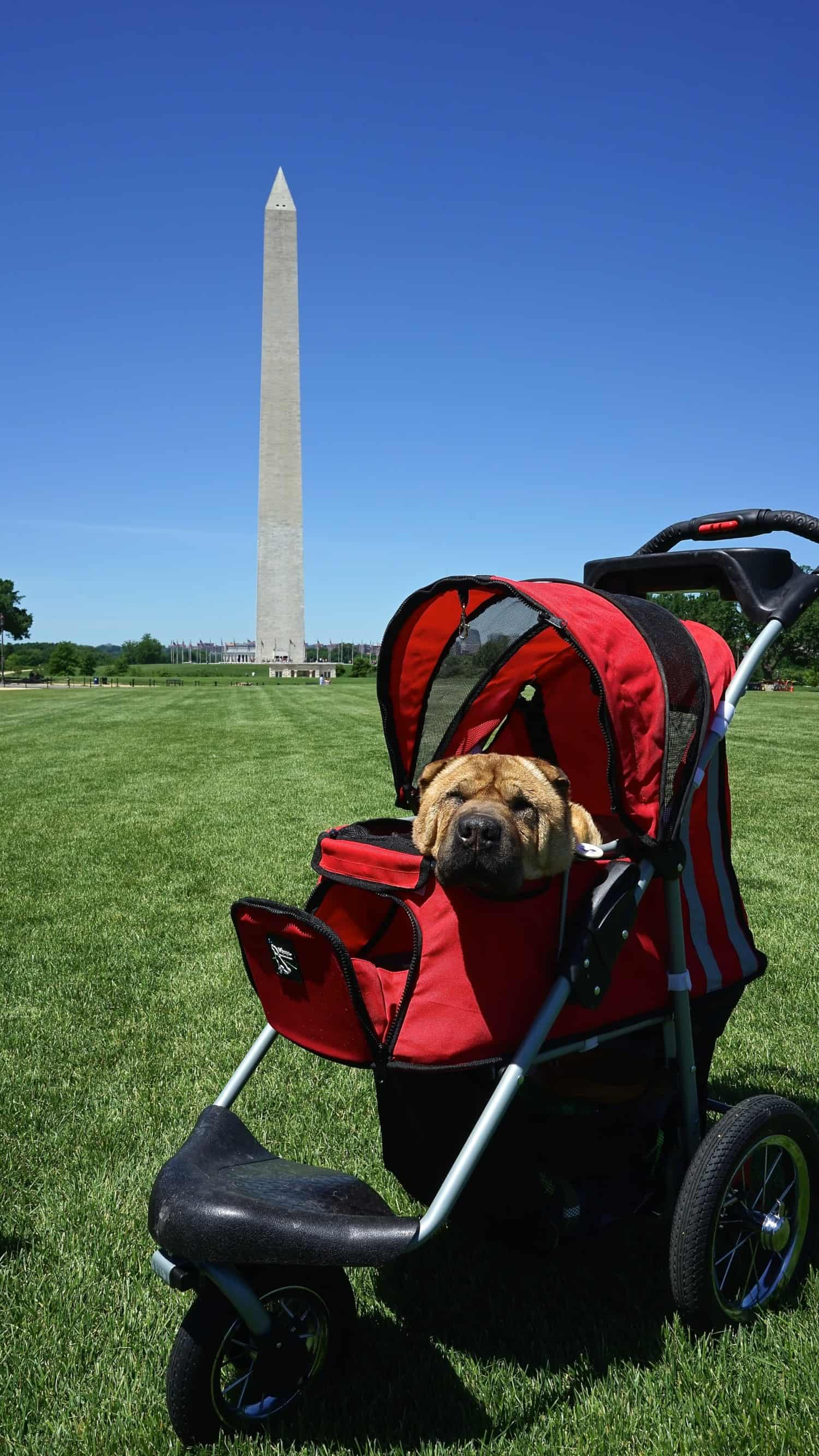 That's How We Roll: Ty's Stroller | GoPetFriendly.com