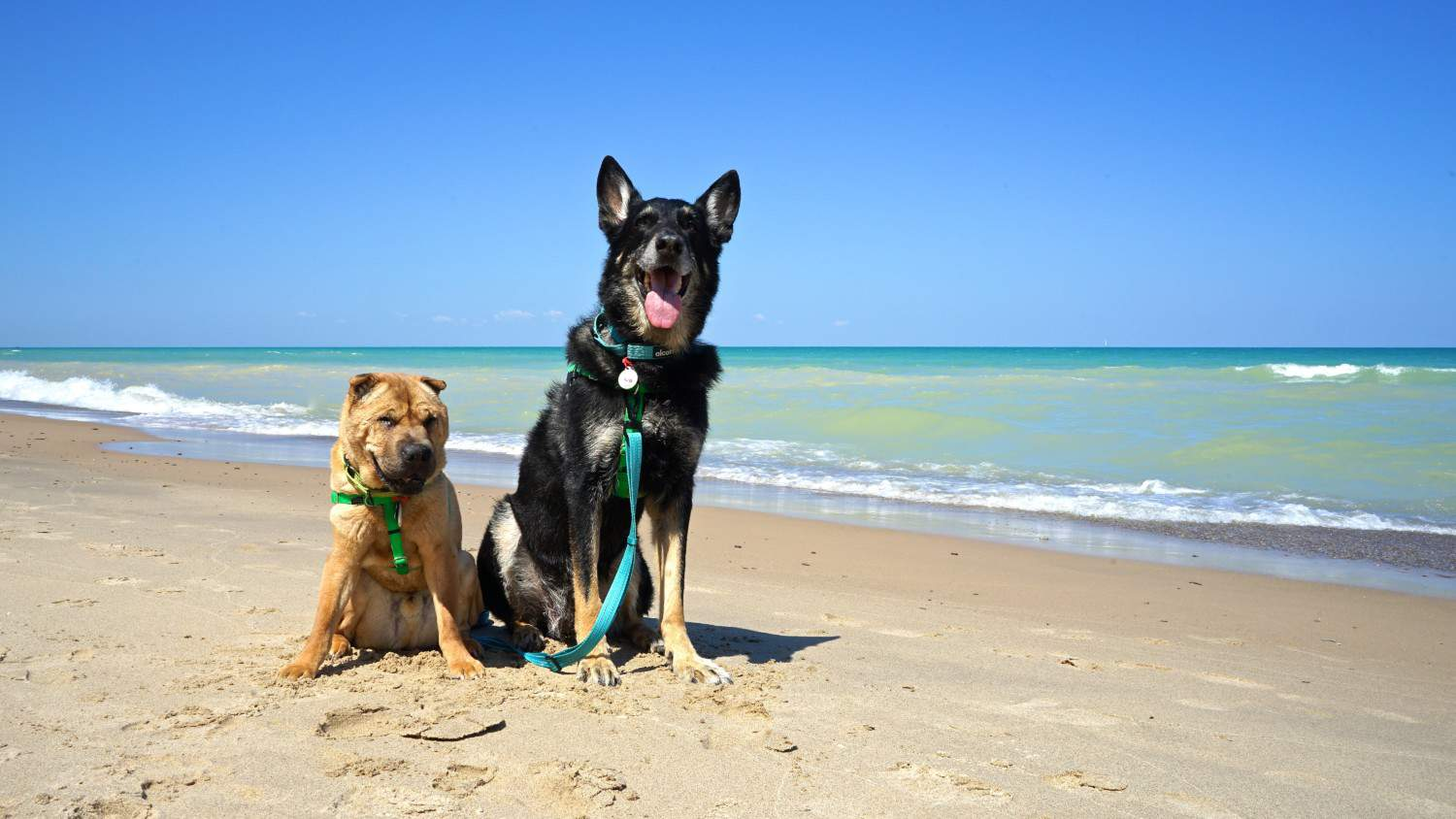 Pet Friendly National Park: Indiana Dunes