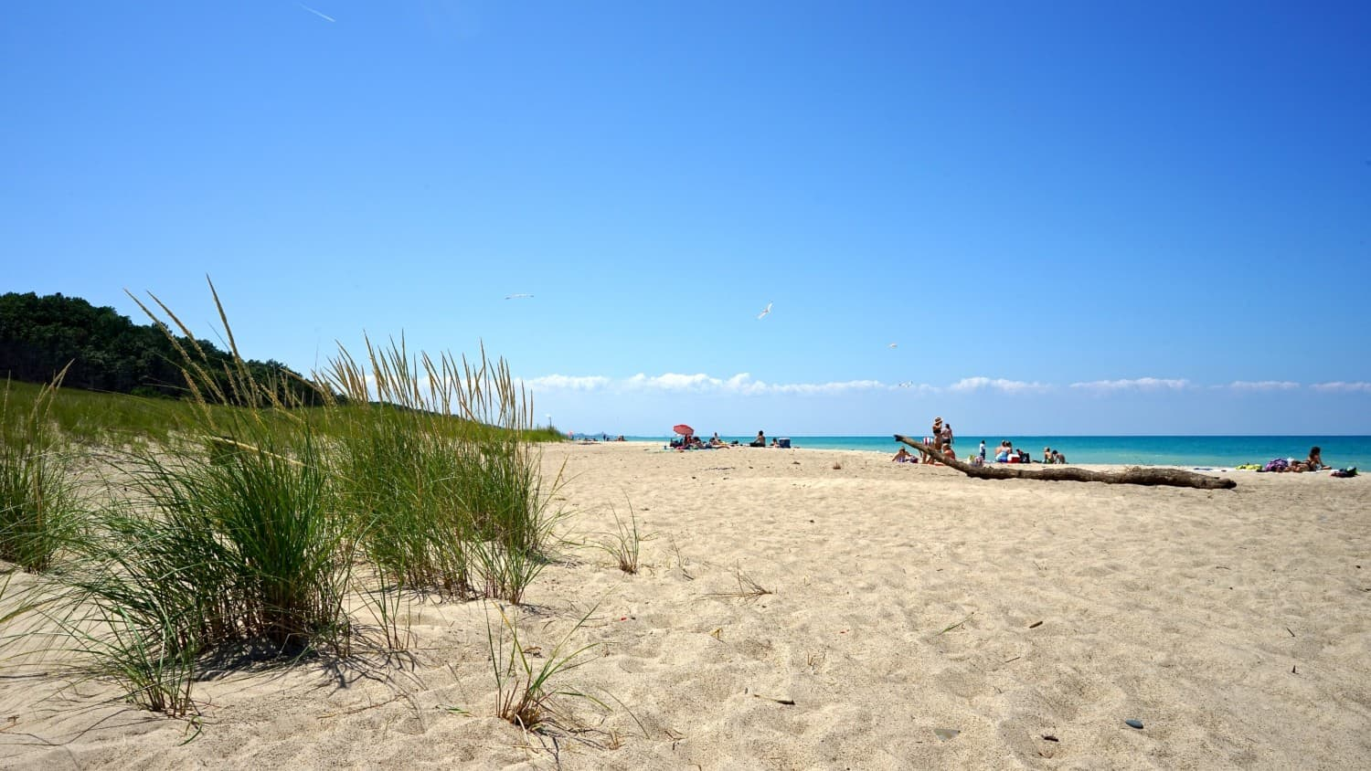 Indiana's Top Pet Friendly Attraction: Indiana Dunes Lakeshore | GoPetFriendly.com