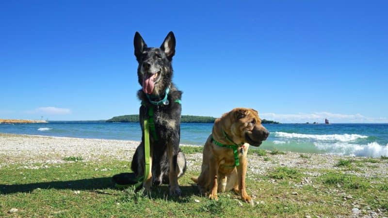 Michigan's Top Pet Friendly Attraction: Mackinac Island | GoPetFriendly.com