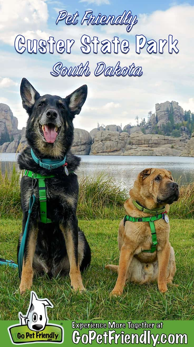 A German Shepherd Dog and a Shar-Pei sitting by Sylvan Lake in pet friendly Custer State Park in South Dakota