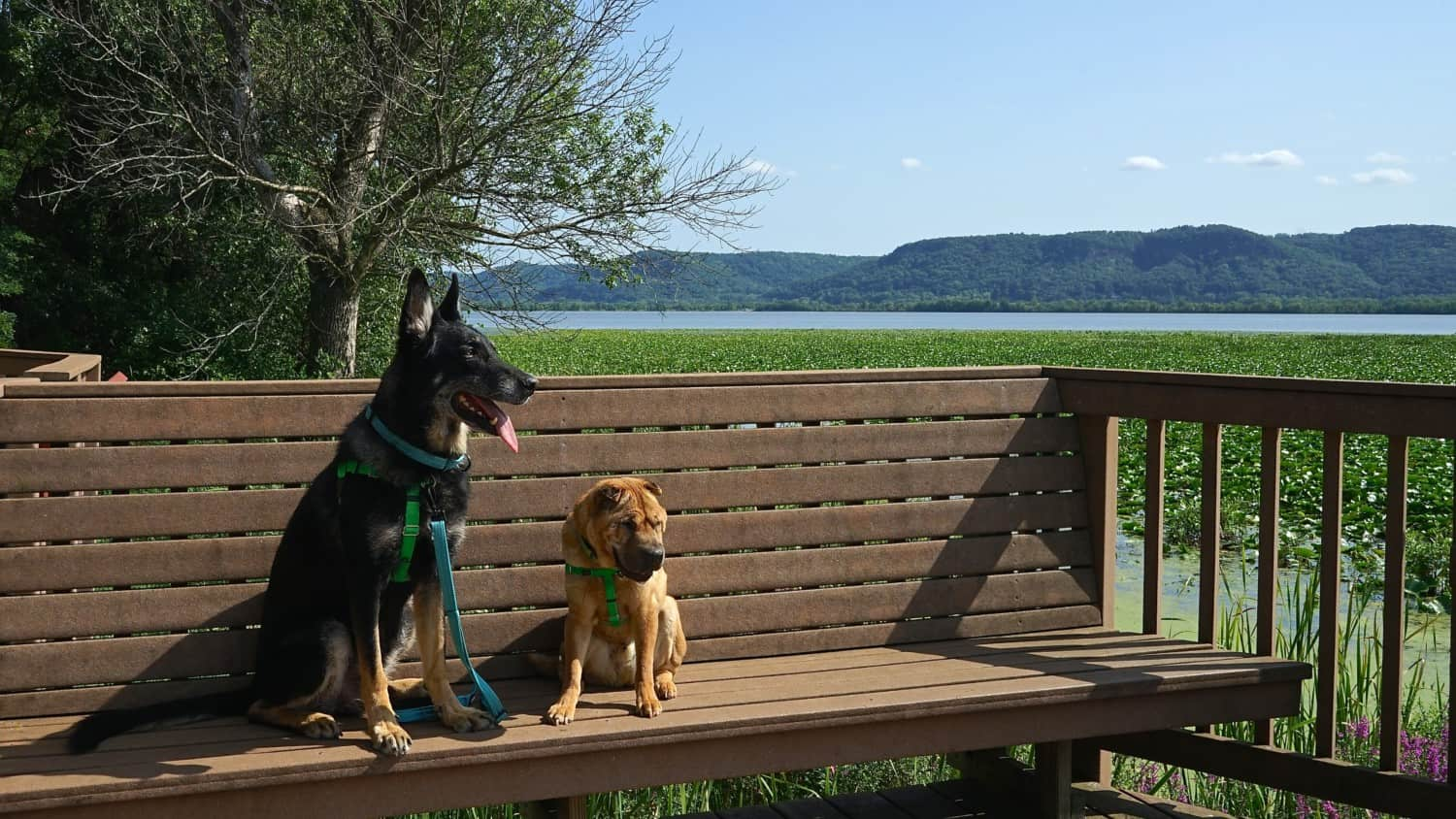 Wisconsin's Top Pet Friendly Attraction: Trempealeau National Wildlife Refuge | GoPetFriendly.com