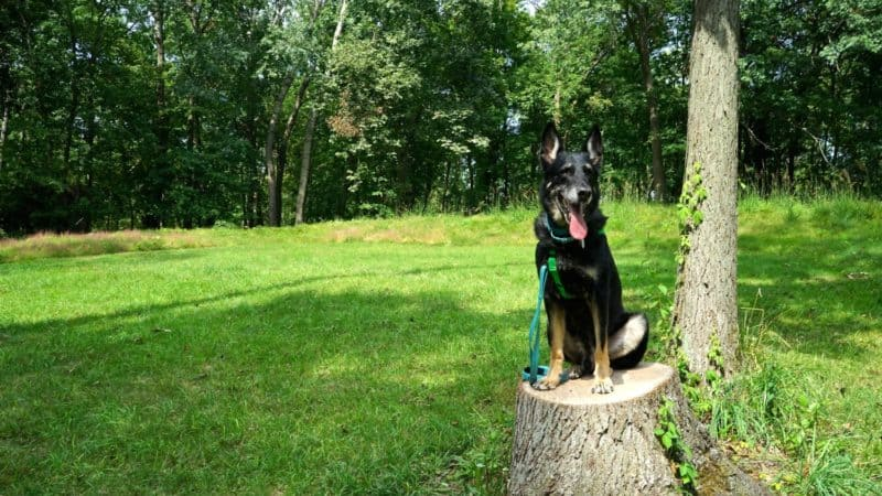 Iowa's Top Pet Friendly Attraction: Effigy Mounds National Monument | GoPetFriendly.com