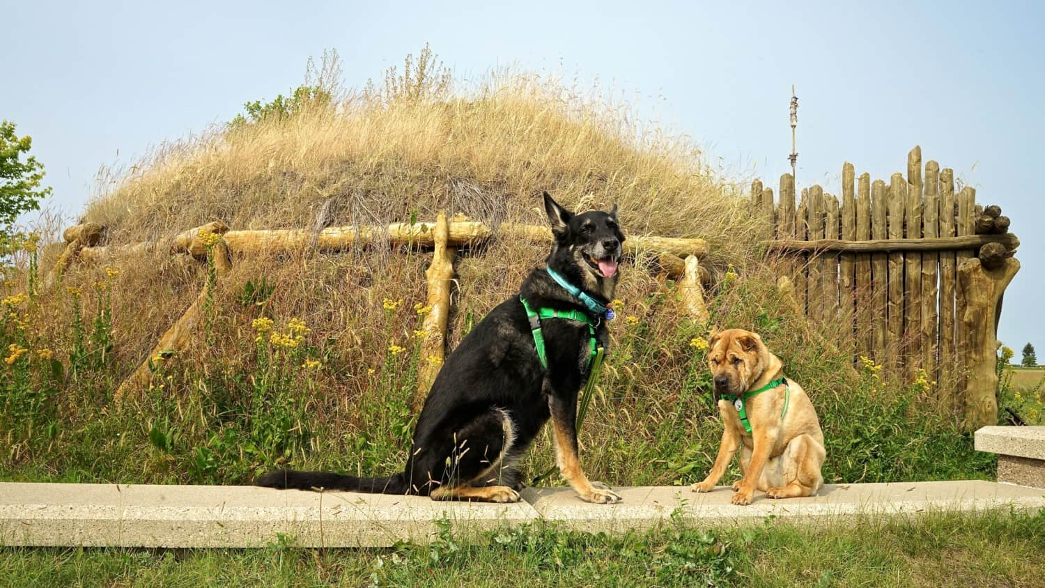 North Dakota's Top Pet Friendly Attraction: Knife River Indian Villages | GoPetFriendly.com