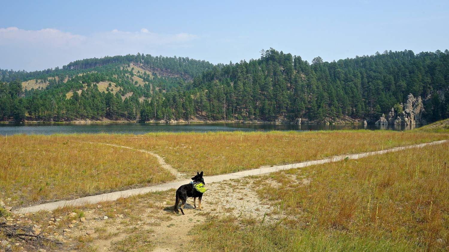 South Dakota's Top Pet Friendly Attraction: Custer State Park | GoPetFriendly.com