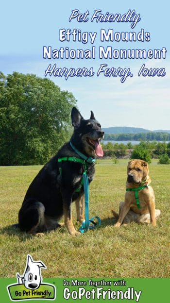 German Shepherd and Shar-pei dogs posing at pet friendly Effigy Mounds National Monument in Harpers Ferry, IA