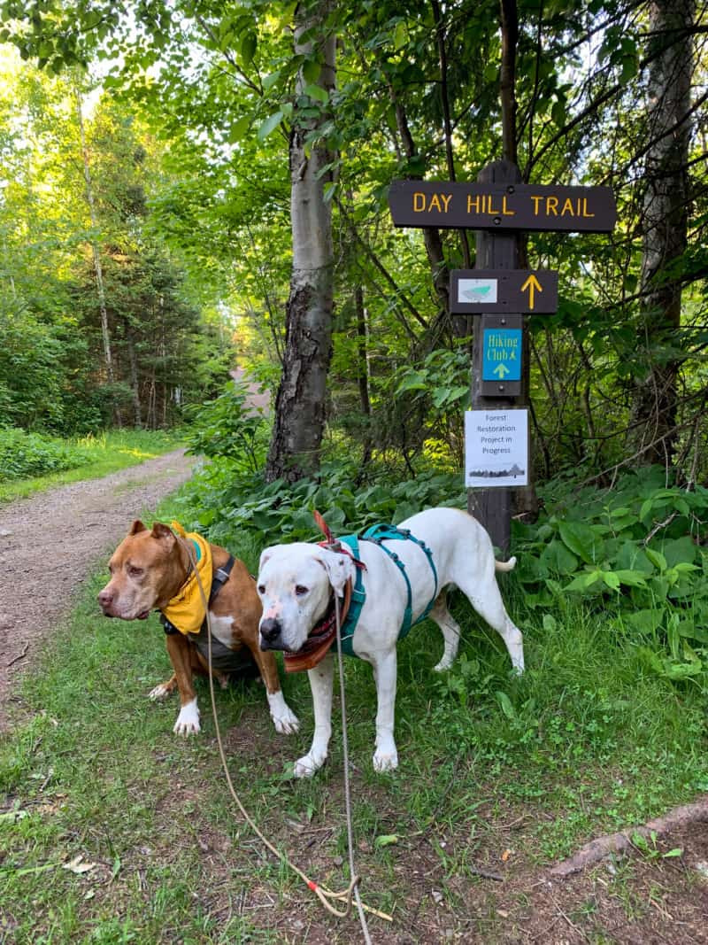 A brown dog and a white dog standing in front of the Day Hill Trail sign with a view of the trail and woods behind them at Split Rock Lighthouse State Park in Minnesota