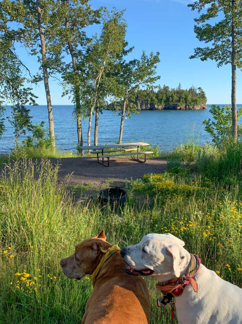 A brown dog and a white dog near a picnic site in front of Lake Superior at Split Rock Lighthouse State Park; a wooded island can be seen in the distance.