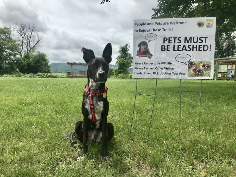Brindle dog in red harness sitting beside a sign at the pet friendly Trempealeau National Wildlife Refuge in Wisconsin