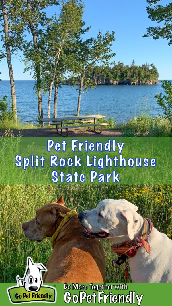 Two dogs at a pet friendly picnic area in Split Rock Lighthouse State Park, Minnesota