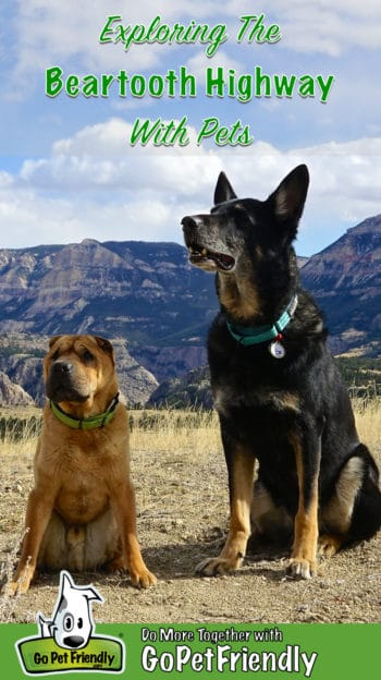 Shar-pei and German Shepherd Dog sitting on a pet friendly trail along the Beartooth Highway in Montana