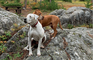 Exploring The Beartooth Highway With Pets