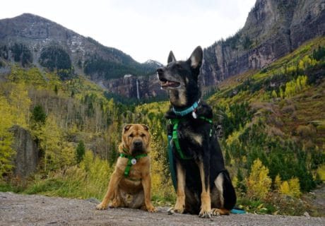 Pet Friendly Telluride, Colorado – A Rocky Mountain Adventure With Dogs