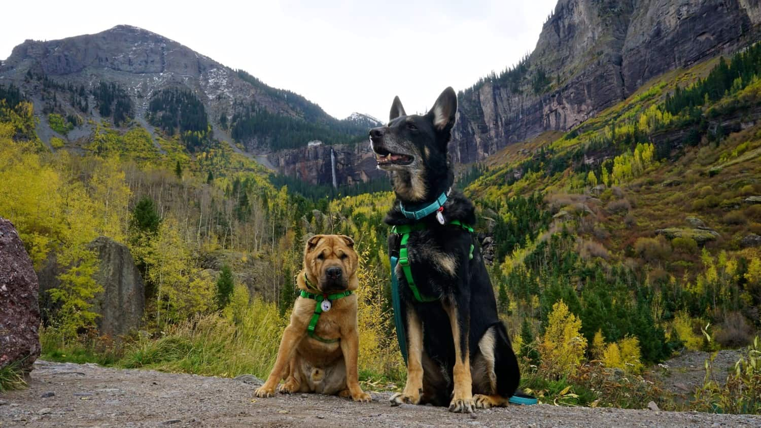 Pet Friendly Telluride, Colorado - A Rocky Mountain Adventure With Dogs