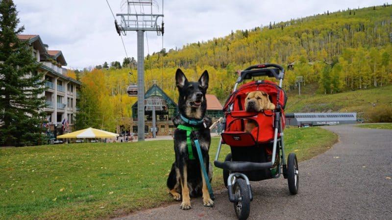 Colorado's Top Pet Friendly Attraction: Telluride Gondola | GoPetFriendly.com