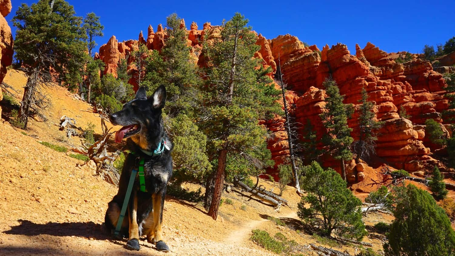 Utah's Top Pet Friendly Attraction: Dixie National Forest   GoPetFriendly.com