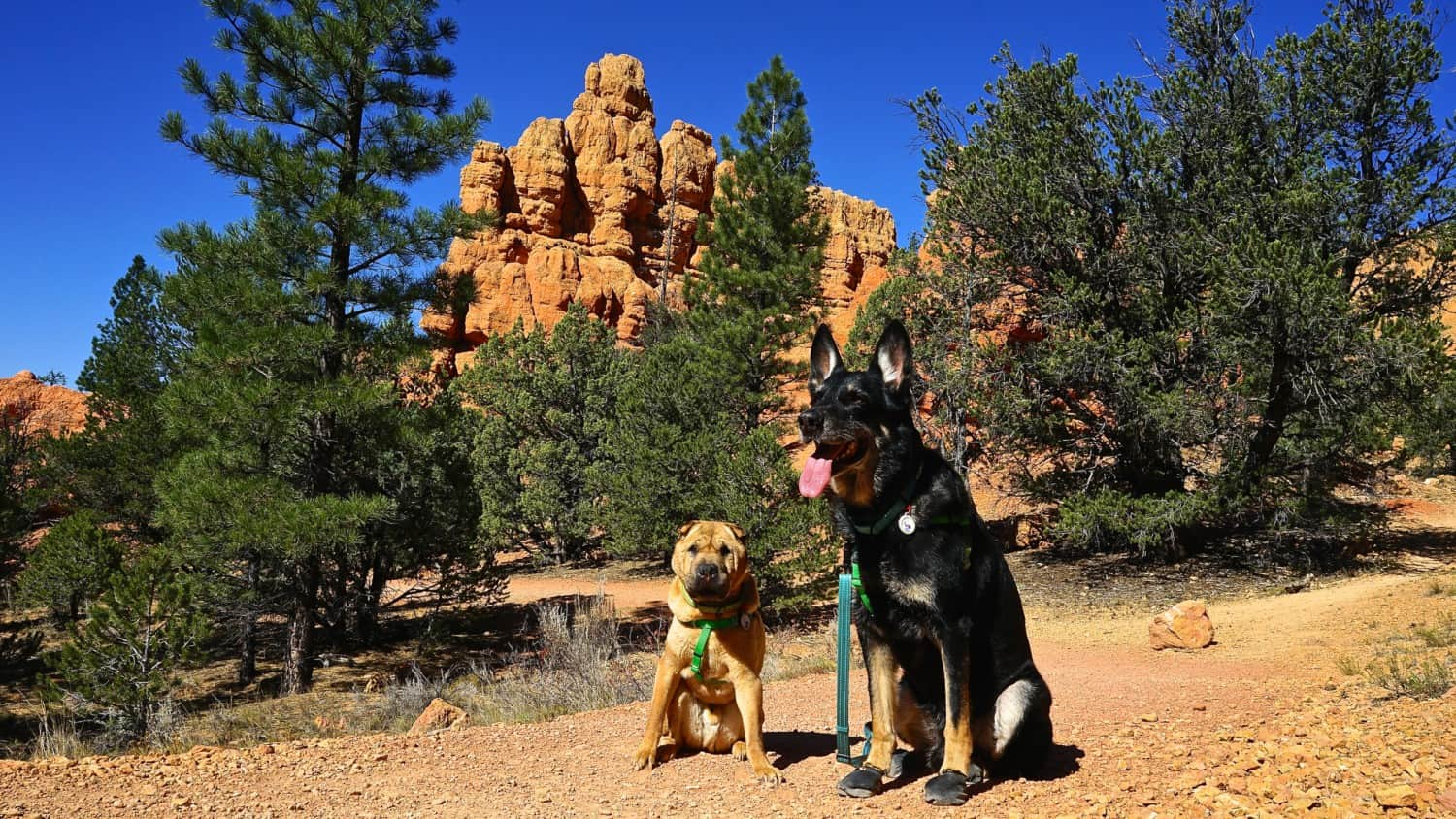 Utah's Top Pet Friendly Attraction: Dixie National Forest