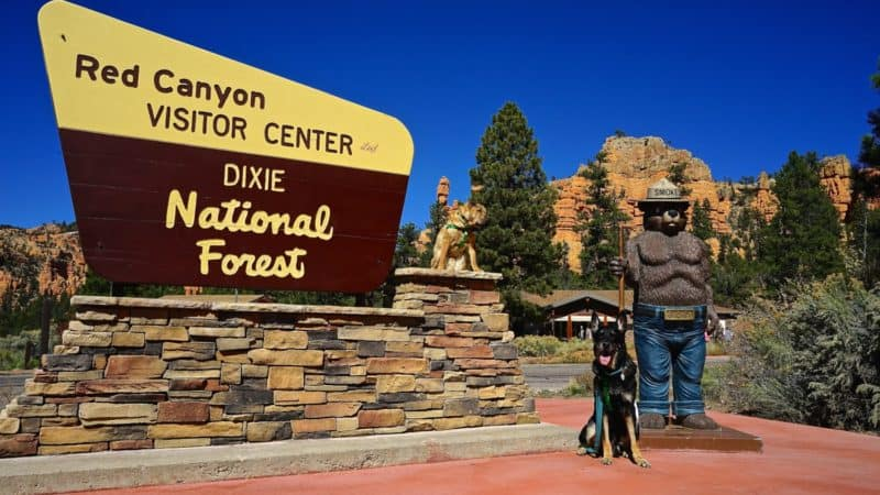 Utah's Top Pet Friendly Attraction: Dixie National Forest | GoPetFriendly.com