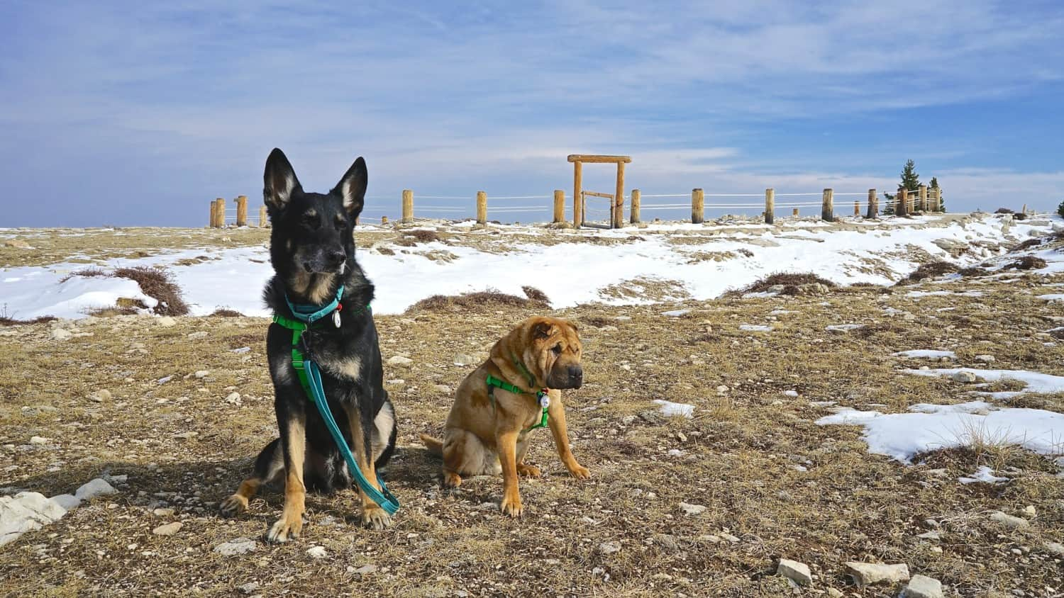 Wyoming's Top Pet Friendly Attraction: Bighorn National Forest-Medicine Wheel