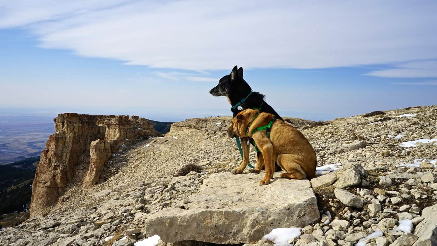 Wyoming's Top Pet Friendly Attraction: Medicine Wheel | GoPetFriendly.com