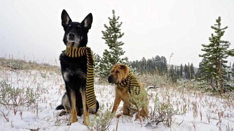 Montana's Top Pet Friendly Attraction: Beartooth Highway | GoPetFriendly.com