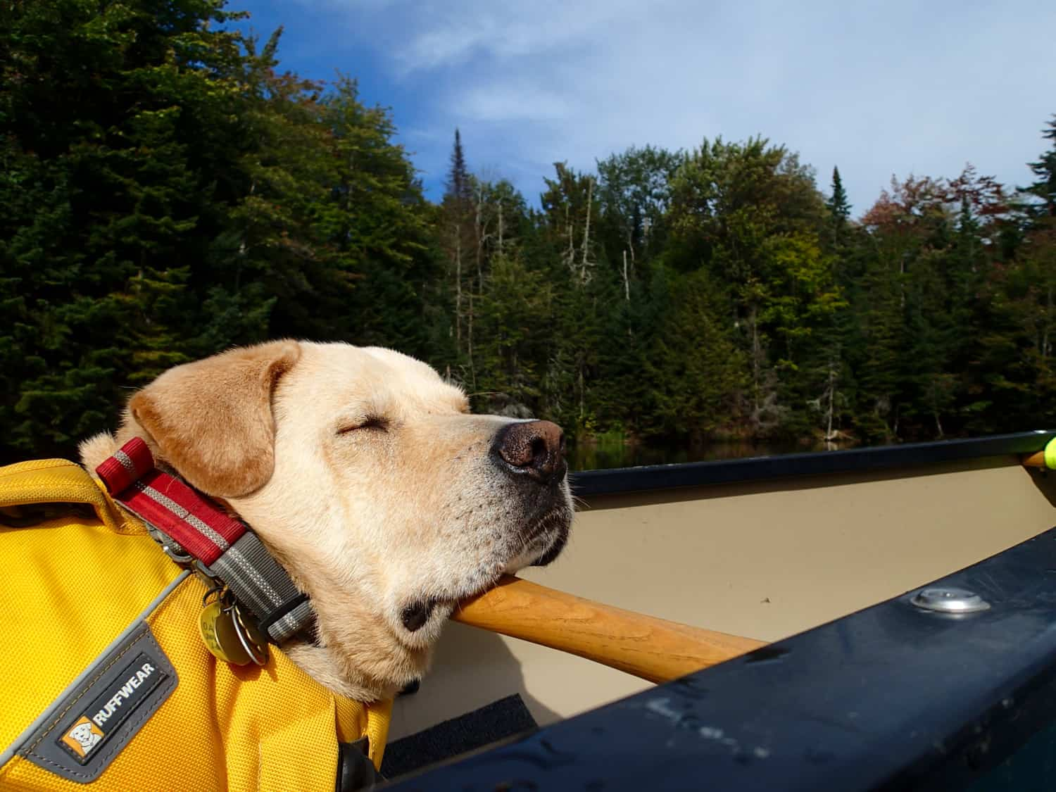 Tips for Canoeing and Kayaking with Dogs   GoPetFriendly.com