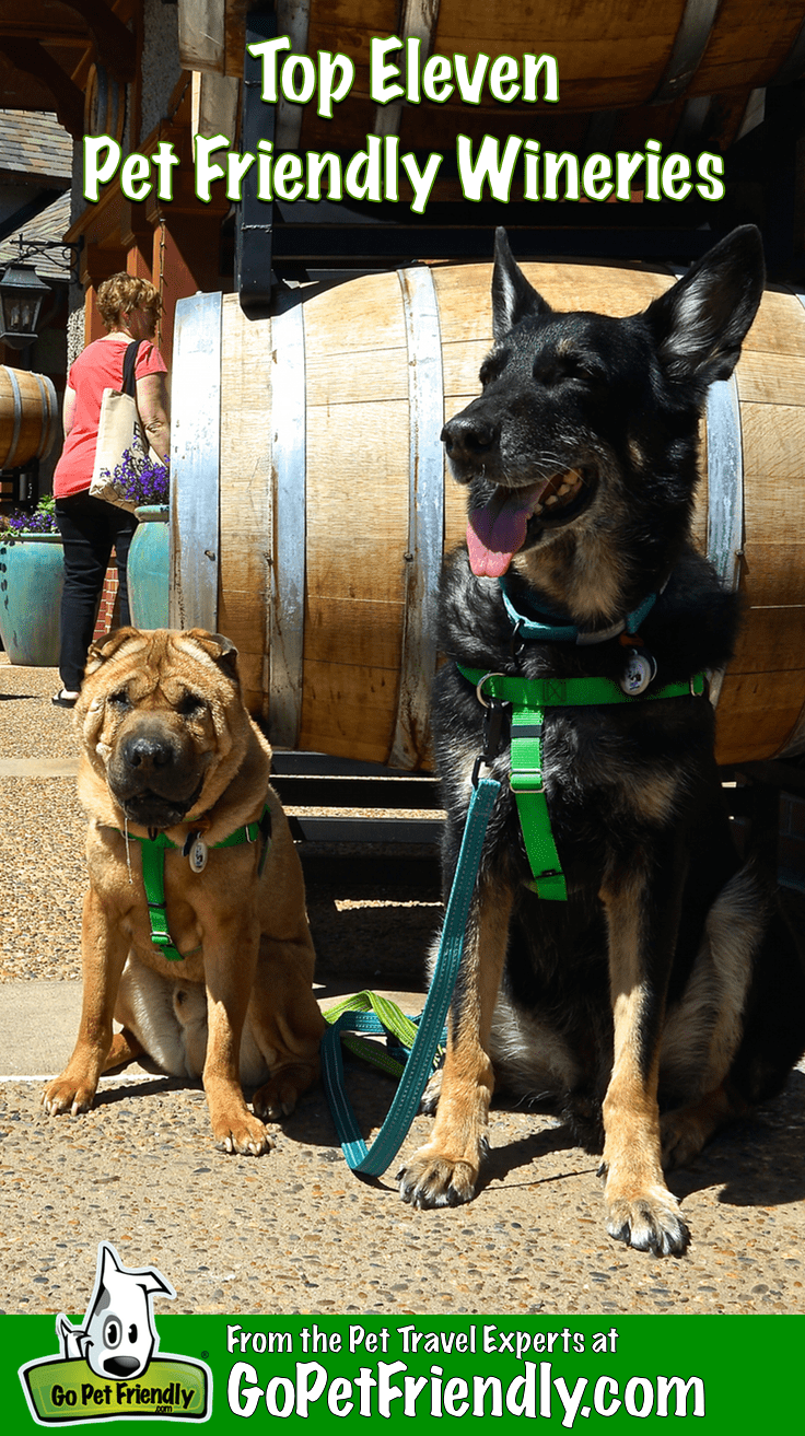 Top 11 Pet Friendly Wineries to Visit This Fall | GoPetFriendly.com