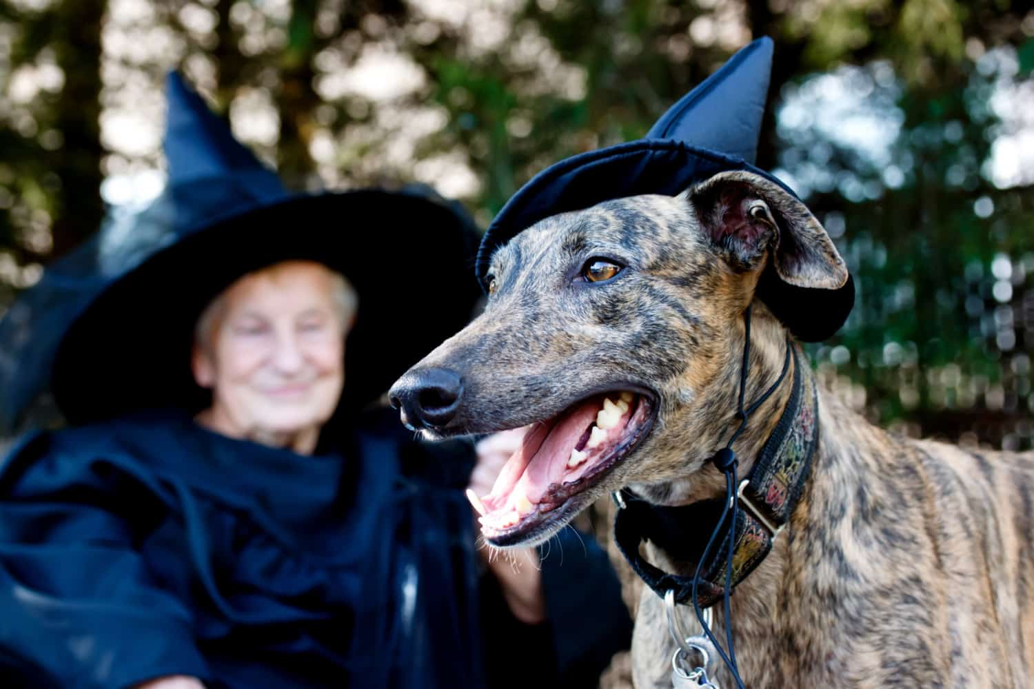 Pet Friendly Ghost Tours for Howl-o-ween | GoPetFriendly.com