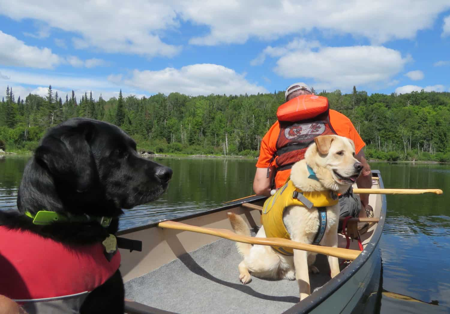 A yellow lab in a life vest sitting in a canoe with a man sitting in the bow behind him