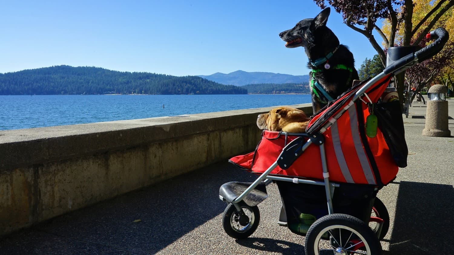 Ty and Buster from GoPetFriendly.com on a pet friendly trail in Coeur d'Alene, ID