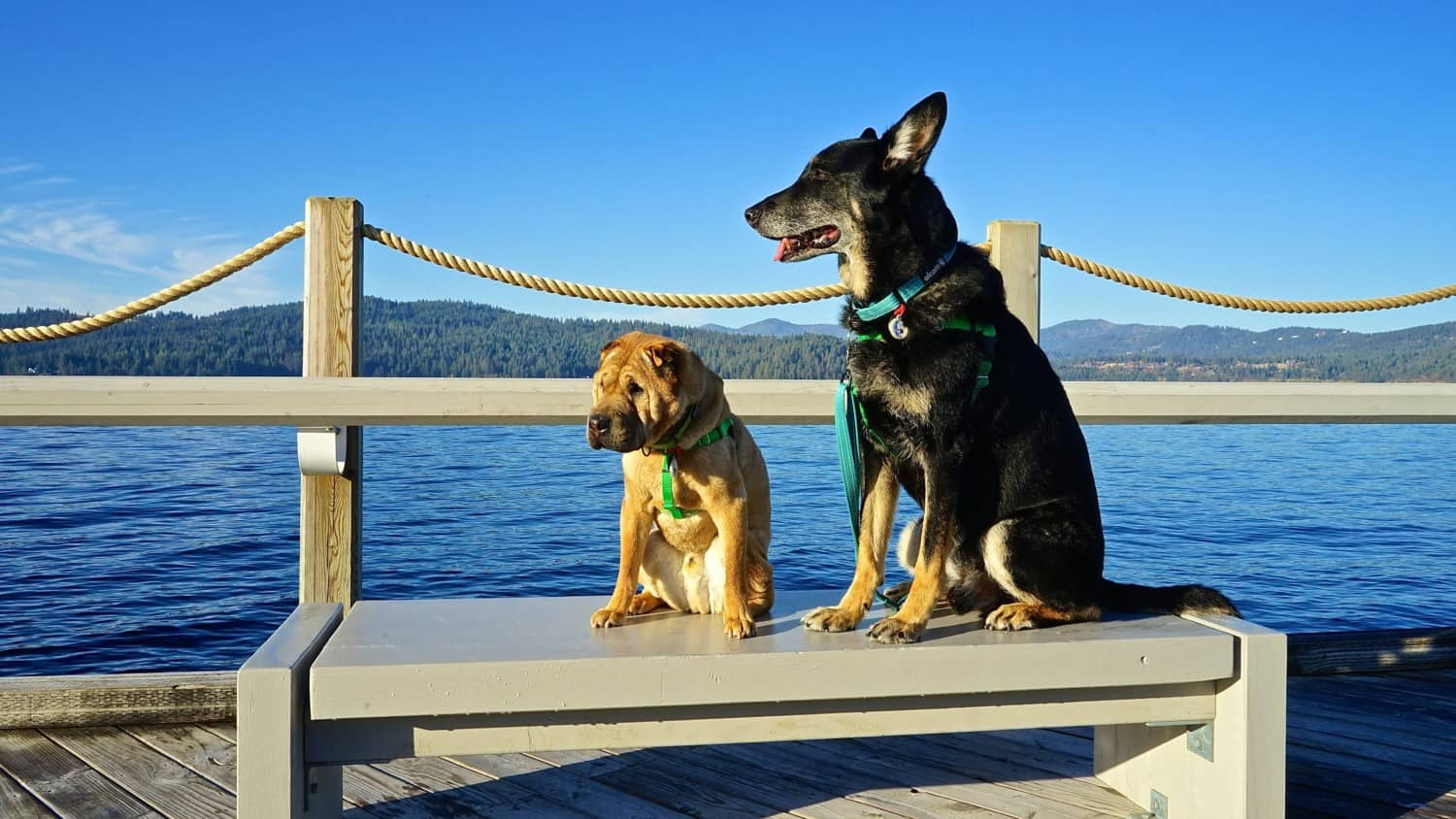 Pet Friendly Things To Do In Coeur d'Alene, Idaho