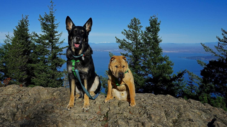 Washington's Top Pet Friendly Attraction: San Juan Islands   GoPetFriendly.com