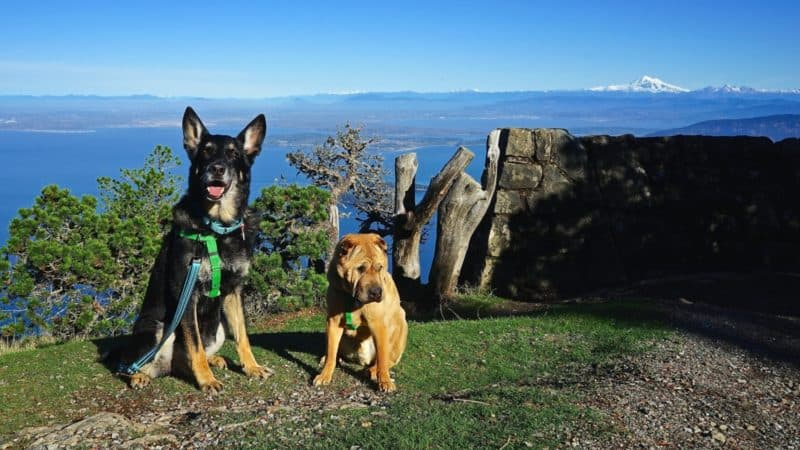 Washington's Top Pet Friendly Attraction: San Juan Islands | GoPetFriendly.com