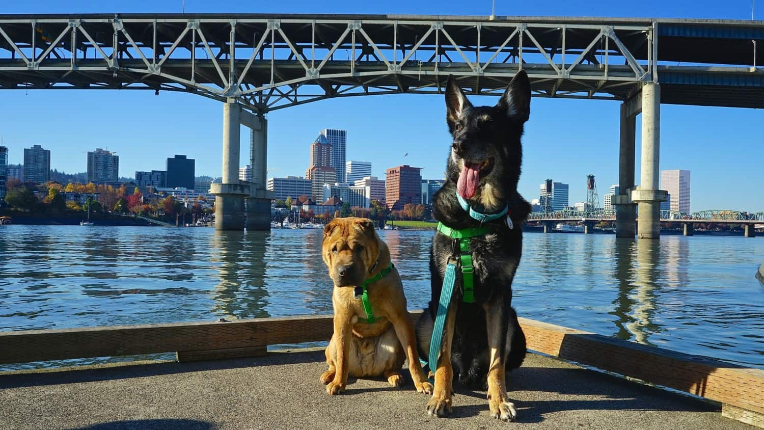 Oregon's Top Pet Friendly Attraction: Portland's Parks | GoPetFriendly.com