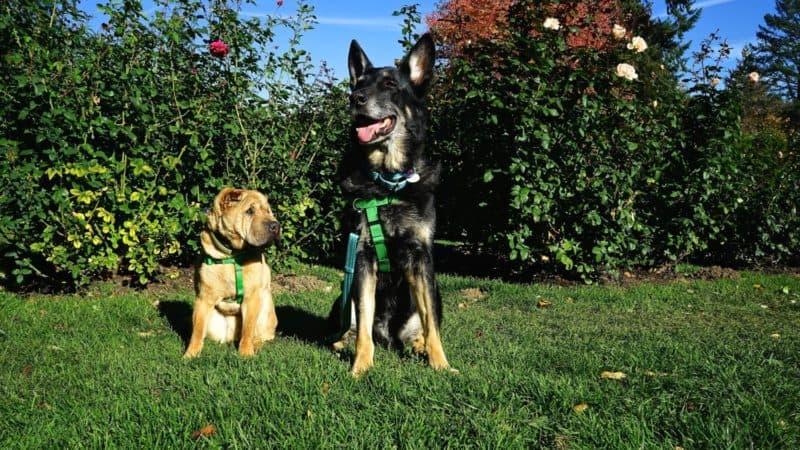 Oregon's Top Pet Friendly Attraction: Portland's Parks | GoPetFriendly.com