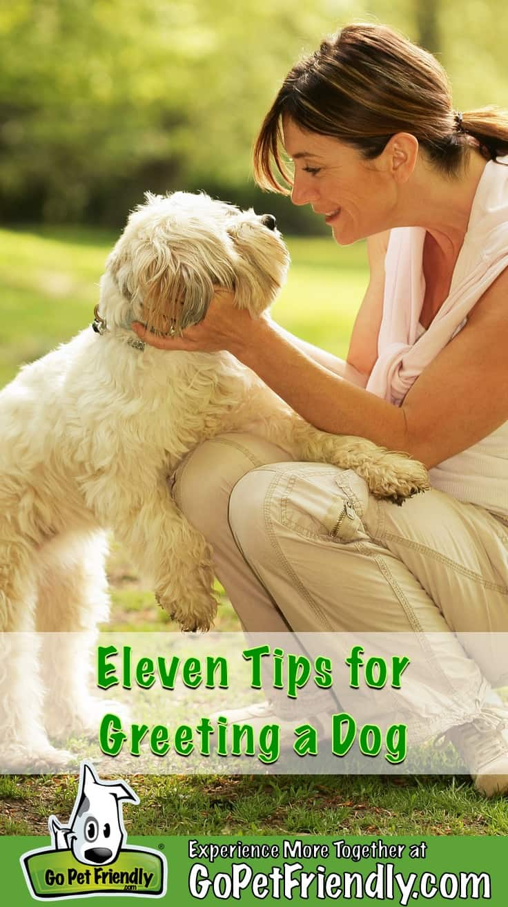 Woman crouching down to greet a dog that's white and fluffy dog