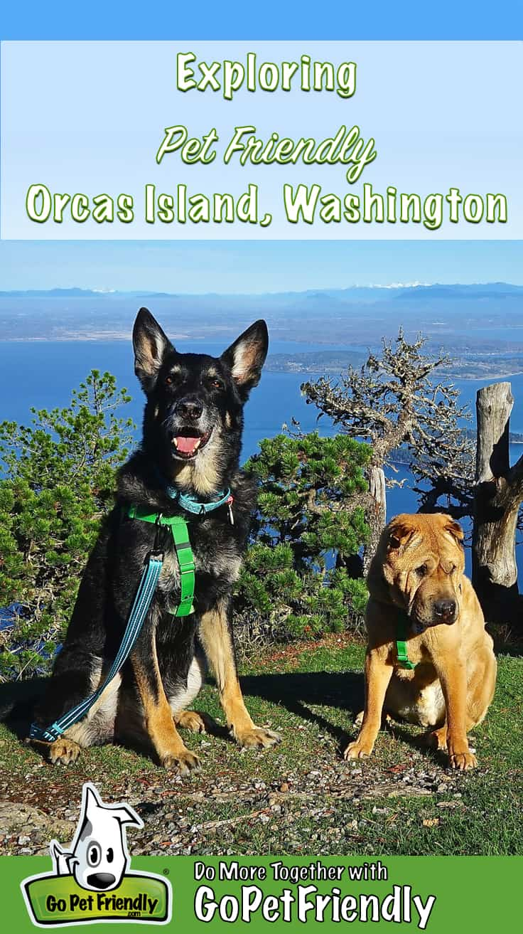 German Shepherd Dog and Shar-pei posing in a pet friendly park on Orcas Island, WA