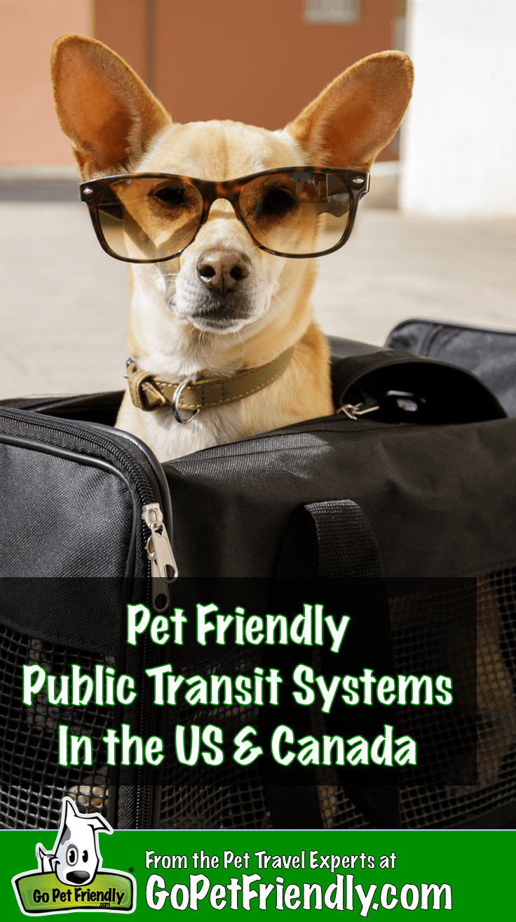 Pet Friendly Public Transportation in the US and Canada | GoPetFriendly.com