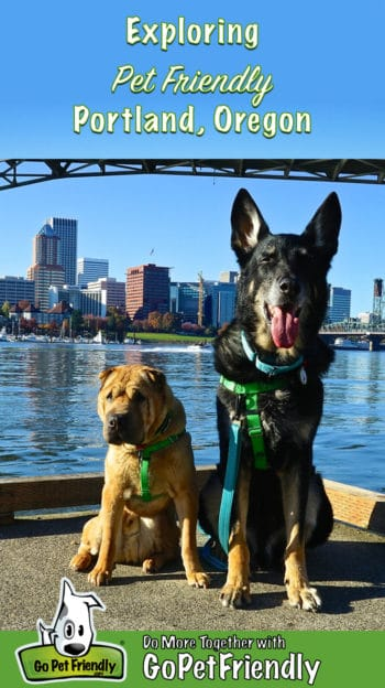 Shar-pei and German Shepherd Dog on a pet friendly path with the Portland, Oregon skyline in the background