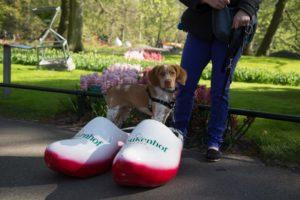 The Netherlands' Pet Friendly Keukenhof Gardens | GoPetFriendly.com